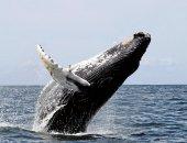 Canadá del Este y ballenas