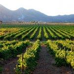 La Ruta del Vino Baja California