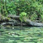 caribe-de-guatemala